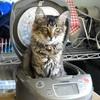 【デスメ膜瘤】失明の危機を乗り越えて ~我が家の家族になった子猫、ステラのお話~