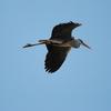 【野鳥】No.7 新潟 春の野鳥④