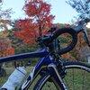 バイカーの聖地・せせらぎ街道で一足早めの紅葉狩り【東海ロードバイク巡り】