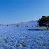 青空に溶け込むブルーの絶景。ひたち海浜公園のネモフィラを見てきた2018