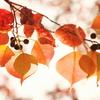 アキュラホーム大感謝祭のお知らせ