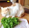 写真で7コマ物語「わさび菜とネコたち」
