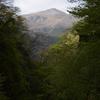 霊仙山へ向かう道の花図鑑