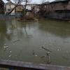 池の水全部、、?