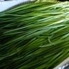 お仕事詳細のご案内②〜高知県産ニラを通年固定の価格と供給量で卸します〜