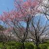 京都府立植物園の桜と春の花