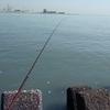 揖斐川のハゼ釣り