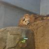 円山動物園 ― ゾウがやって来た ―