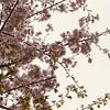 久しぶりの外出で見た街の様子。暗い驚きばかりの中でも桜は美しかった。