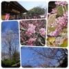 人 青空 露店の匂い   〜桜に似合うもの〜