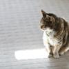 ユキちゃん-我が家のペット紹介-