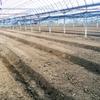 太陽熱養生処理の企業実習をしてきました!