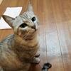 猫の寄生虫を駆除しよう2 猫用寄生虫駆除剤プロフェンダースポット使用後の経過