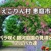 【えこりん村 恵庭市】バラ咲く銀河庭園の見頃とアルパカ達