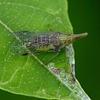 不思議な虫たち(マクロレンズで撮影)