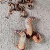 カブトムシの幼虫が大きくなりました!沢山の幼虫を一つの容器に・・・