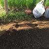 41day:大根の種まき