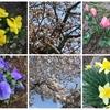春爛漫から花冷え