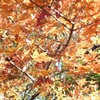 紅葉の奈良旅 Day2