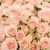 電話一本で花束を注文したら実物がホームページの写真となんか違った話。