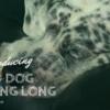 老犬が長生きする秘訣〜老犬介護に本当に必要なモノ〜