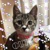 【保護活動】【多頭飼い】私にとって、やはりアメショは特別でした ~我が家の猫のお話をします(その4-1)福~