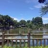 立会川を遡り、いくつかの池を見ながら内川沿いに海まで下る (その1)
