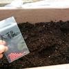 大根と水菜の害虫被害のリベンジマッチ!