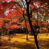 永観堂紅葉観光〜岡崎の京都モダンテラスでランチのコース