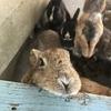 娑々、リスとウサギに癒されて(椿花ガーデン~動物と触れ合い編~)