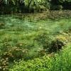 【ゴールデンウィーク】岐阜県関市・モネの池へ行ってきた【水芭蕉】