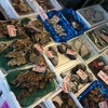 札幌旅行①(二条市場)