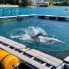 イルカとクジラに会える海上遊歩道が太地町にオープン