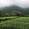 雨上がりにはヤツがいる。9月6日 寄茶園の除草。
