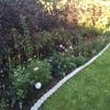 庭の手入れはサボっちゃダメ