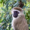 【ルワンダ】バーシーと「大自然」と、人の「温かさ」が魅力の「ルワンダの旅」へ!エネルギーチャージ!