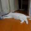 猫様の普段の生活の記録と写真をどうぞ