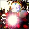 お日様の光。。。  (☆_☆)