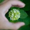 小さな花を優しく
