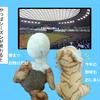 【侍ジャパン強し】2018日米野球終了【MLBなんて怖くない】