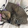 弱いオトコ ~猫はオタマレスになるとこうも気弱になるものなのか?~