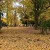 晩秋の上野の森のゴッホ展