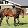 【父:ドレフォン】キャロットクラブ令和3年募集直前!2021年度募集確定馬の種牡馬別評価⑥【一口馬主】