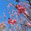 久しぶりに晴れた日曜日!春が近づいているな~