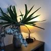 初夏にバッサリ!観葉植物ユッカの剪定方法