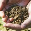 市販の肥料を選ぶポイントって?13種類の肥料と特徴について