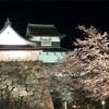 【福岡県福岡市】「福岡さくらまつり」でお花見・福岡城跡、舞鶴公園で桜を愛でる