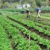 農園日誌ー社会的存在価値ーPARTⅥ-先人達の叡智を学ぶ