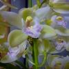 これからどんどん寒くなりますが、早くもお花の季節が楽しみです。