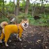 20201001_北軽井沢スウィートグラス2日目、ゆったりまったり柴犬と過ごすキャンプを満喫。中秋の名月も星もご飯もキャンプ全部盛りでした!!